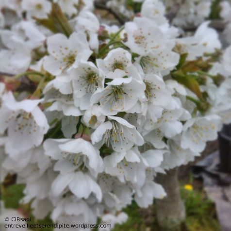 15#fleurs